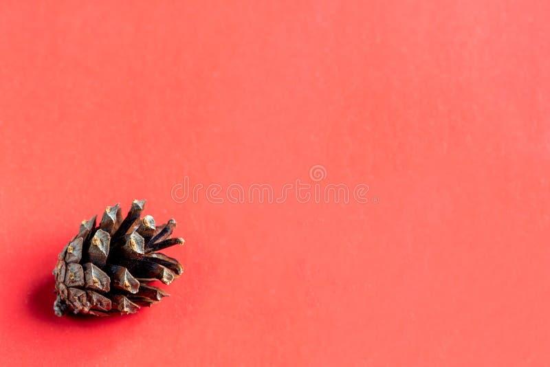 Sosna rożek w kącie na różowym tle Zako?czenie Selekcyjna ostro?? Miejsce dla projekta lub inskrypcji zdjęcia royalty free