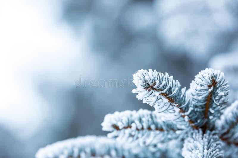 Sosna rozgałęzia się zakrywającego mróz w śnieżnej atmosferze fotografia stock