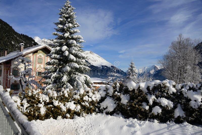 Sosna zakrywająca w śniegu z górami w bach voralberg Austria obraz royalty free
