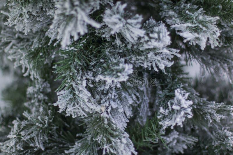 Sosna zakrywająca z śniegiem przy Hangang parkiem, Seul, korea południowa fotografia stock