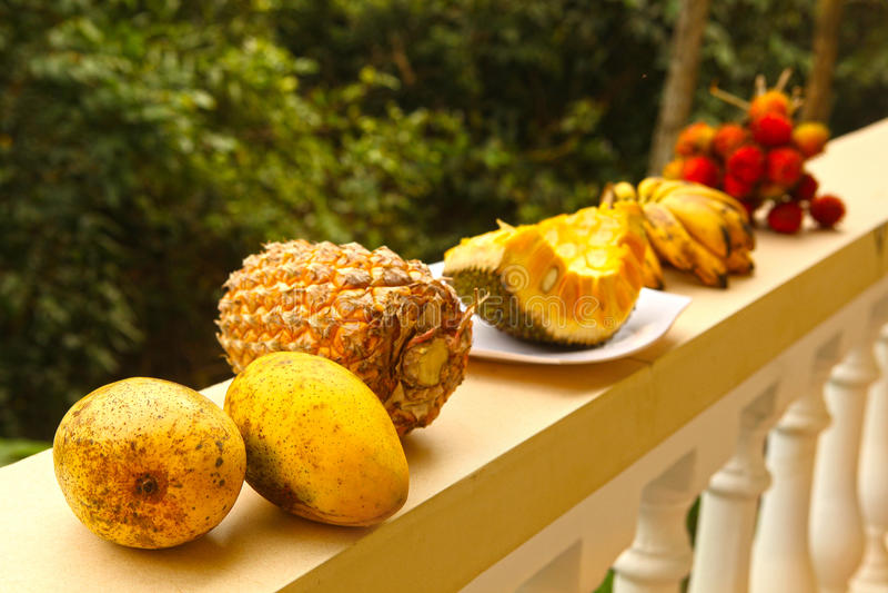Sosnowa jabłczana żółta mangowa dźwigarki owoc bliźniarka obraz royalty free