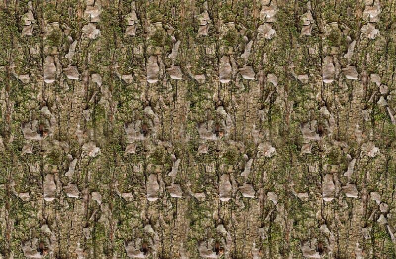 Sosnowa tekstura z zielonego mech naturalnym niekończący się tłem obraz royalty free