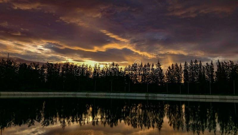 Sosnowy jezioro zdjęcia royalty free
