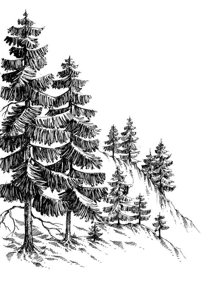 Sosnowy las ilustracja wektor