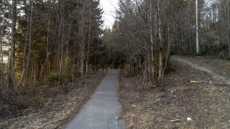 Sosnowy las na początku wiosny Las po zima krajobrazu obrazy stock