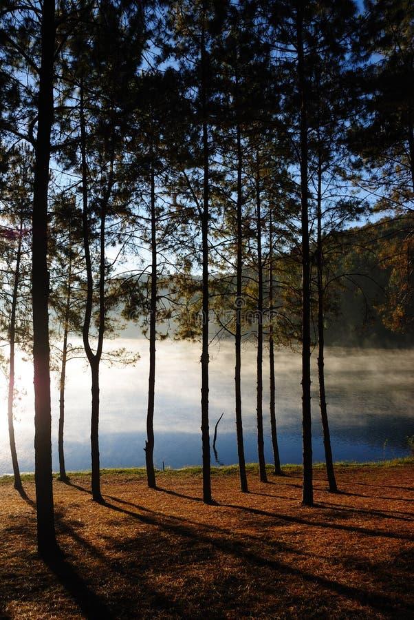 Sosnowy las przy ssanie w żołądku Ung, Mea Hong syna prowincja, Tajlandia zdjęcia stock