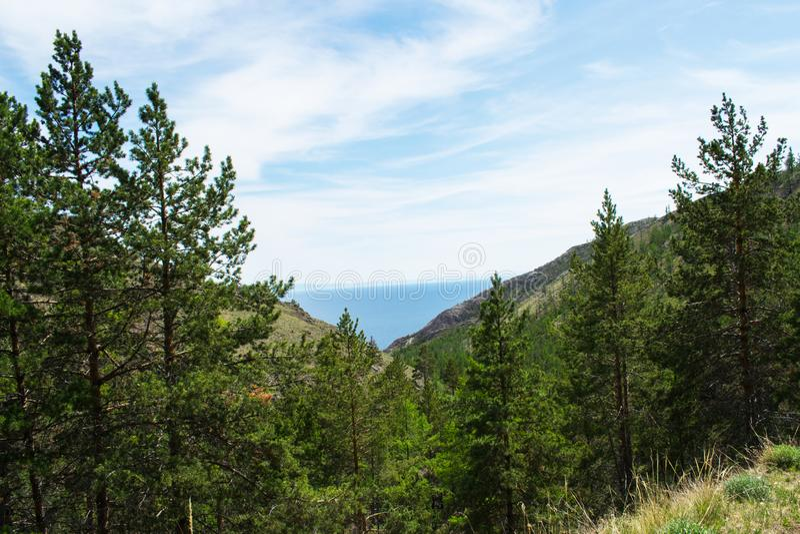 Sosnowy lasowy lato lasu krajobraz G?ry jezioro w Dal obrazy royalty free