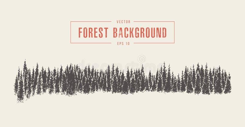 Sosnowy lasowy tło, wektor rysujący, nakreślenie royalty ilustracja