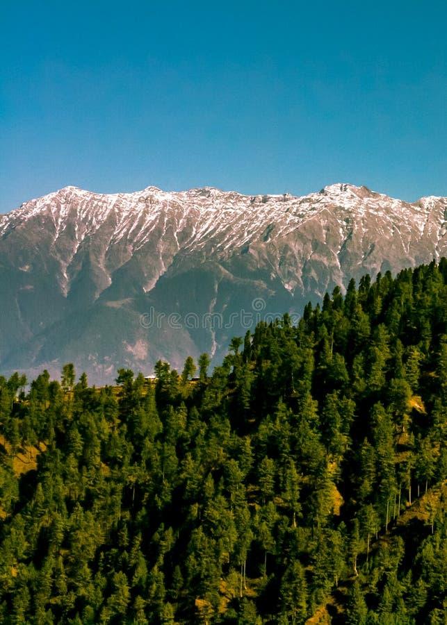 Sosnowy wzgórze zdjęcie stock