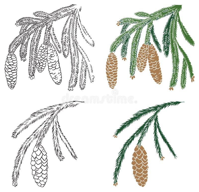 sosny gałęziasta szyszkowa świerczyna ilustracji