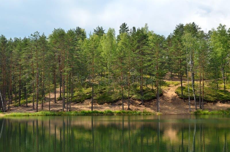 Sosny na jeziorze zdjęcia royalty free