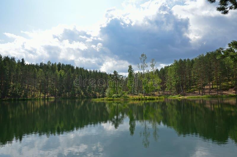 Sosny na jeziorze zdjęcie royalty free