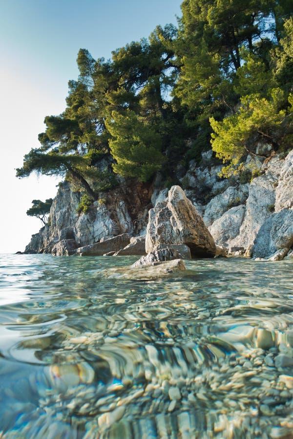Sosny nad dennymi skałami nad kryształem - jasna turkus woda, Kastani Mamma Mia plaża, wyspa Skopelos fotografia royalty free