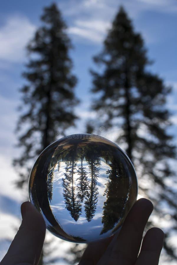 Sosny Sylwetkowe na niebieskim niebie Chwytającym w Szklanej piłki kuli ziemskiej zdjęcia royalty free