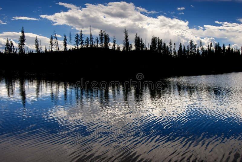 Sosny Sylwetkowe w Rzecznym jeziorze fotografia royalty free