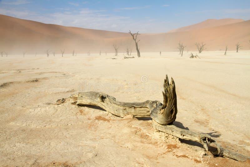 Sossusvlei沙漠,纳米比亚 库存照片
