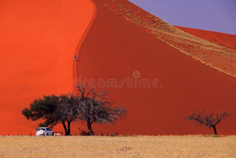 Sossusvlei - dune 45 photo libre de droits
