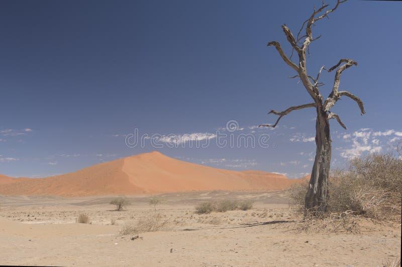 Sossusvlei Namib-Naukluft parkerar - Namibia royaltyfri foto