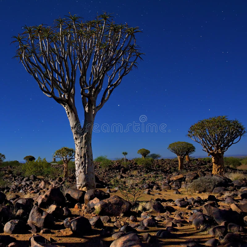 Sossusvlei, parc national de Namib Naukluft, Namibie images libres de droits