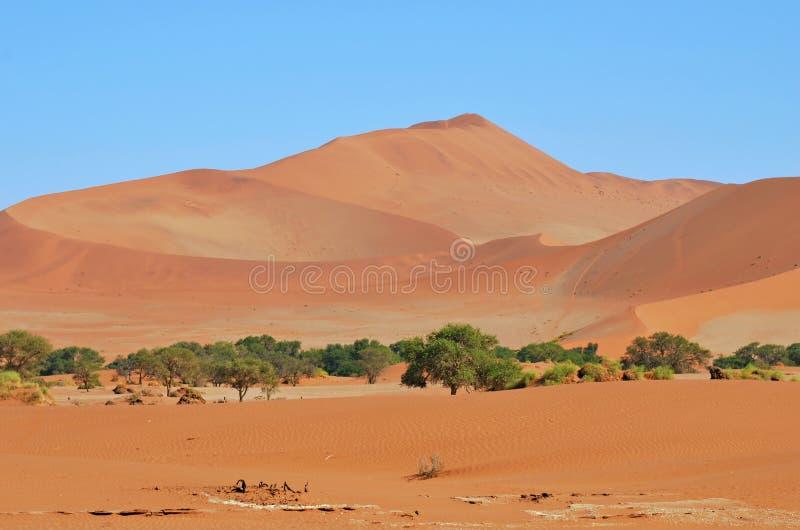 Sossusvlei, parque nacional de Namib Naukluft, Namibia fotos de archivo libres de regalías