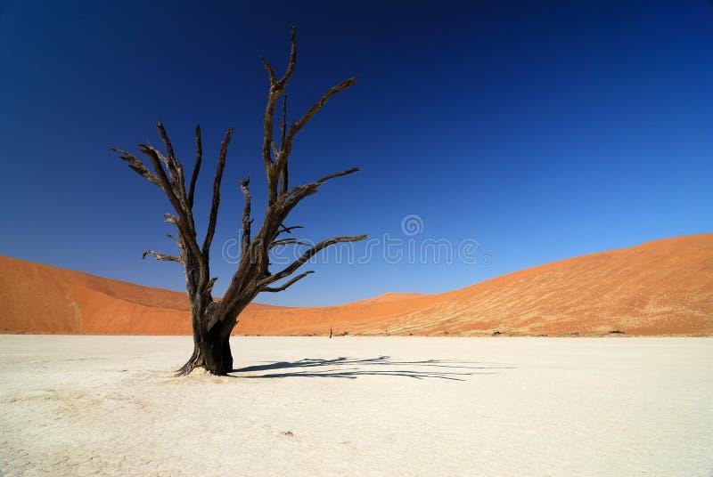 Sossusvlei, parque nacional de Namib Naukluft, Namibia imagen de archivo libre de regalías