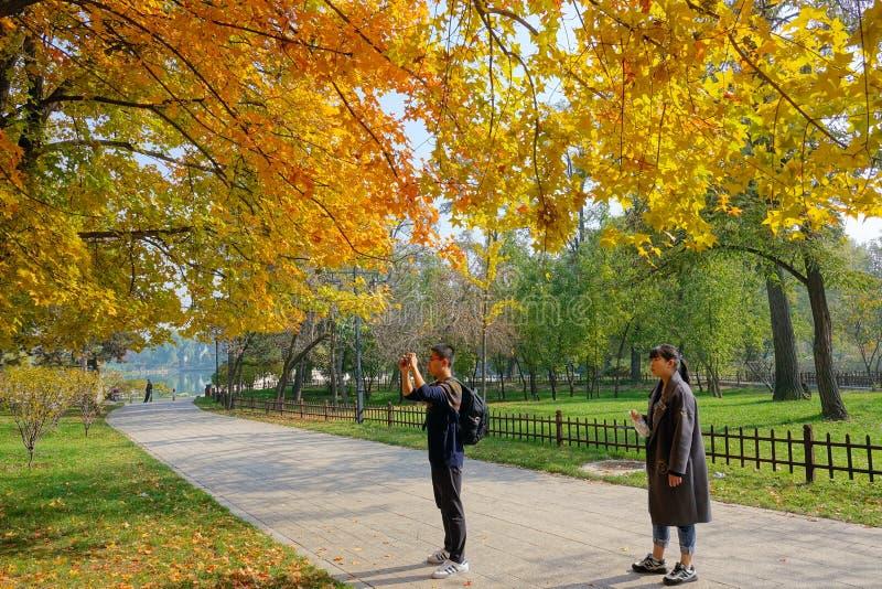 Sosta d'autunno fotografie stock libere da diritti