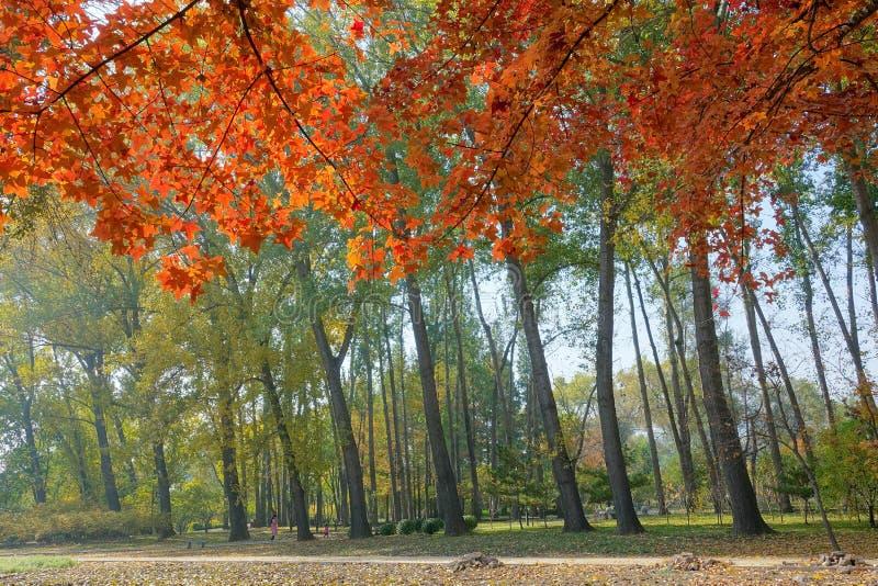 Sosta d'autunno fotografia stock