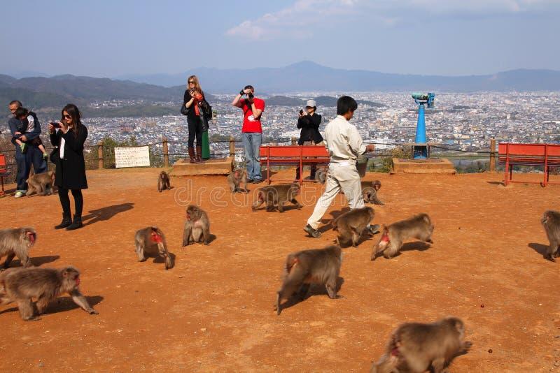 Sosta della scimmia in Arashiyama, Kyoto immagine stock
