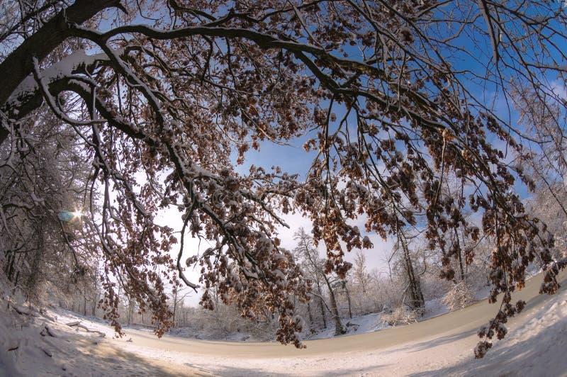Sosta di inverno Albero coperto di neve accanto allo stagno congelato fotografia stock libera da diritti