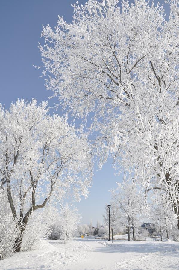 Sosta in inverno immagini stock
