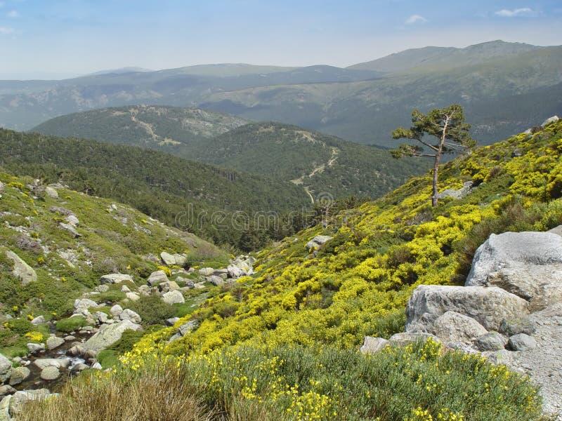 Sosta naturale Peñalara, Madrid, Spagna fotografie stock libere da diritti