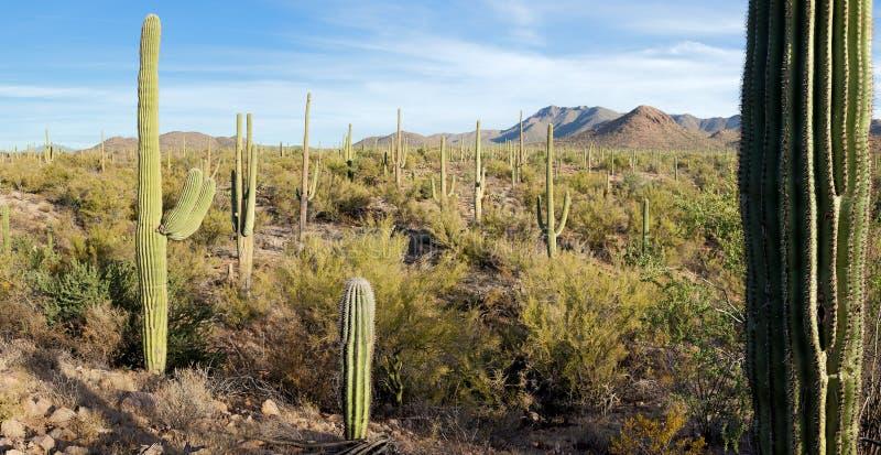 Sosta nazionale del Saguaro fotografie stock libere da diritti