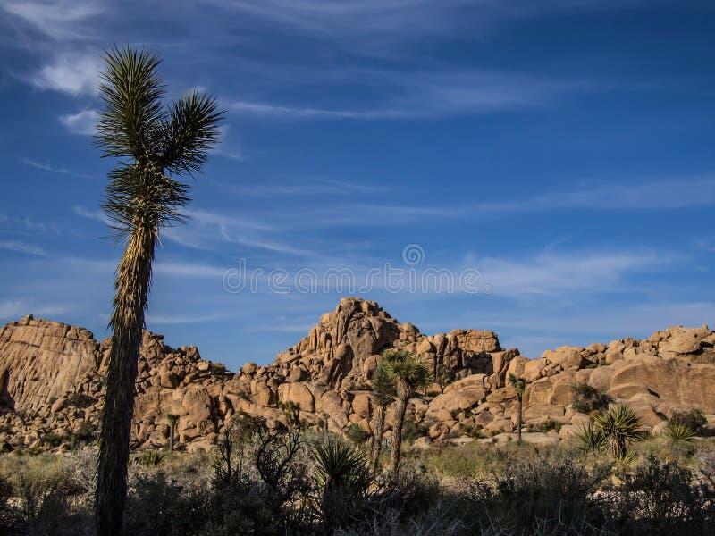 Sosta nazionale dell'albero di Joshua fotografia stock libera da diritti