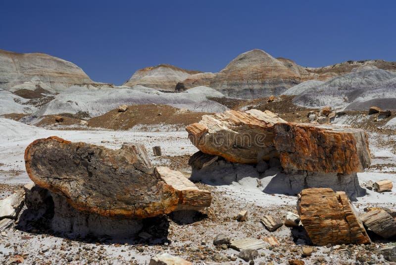 Sosta nazionale della foresta Petrified fotografie stock
