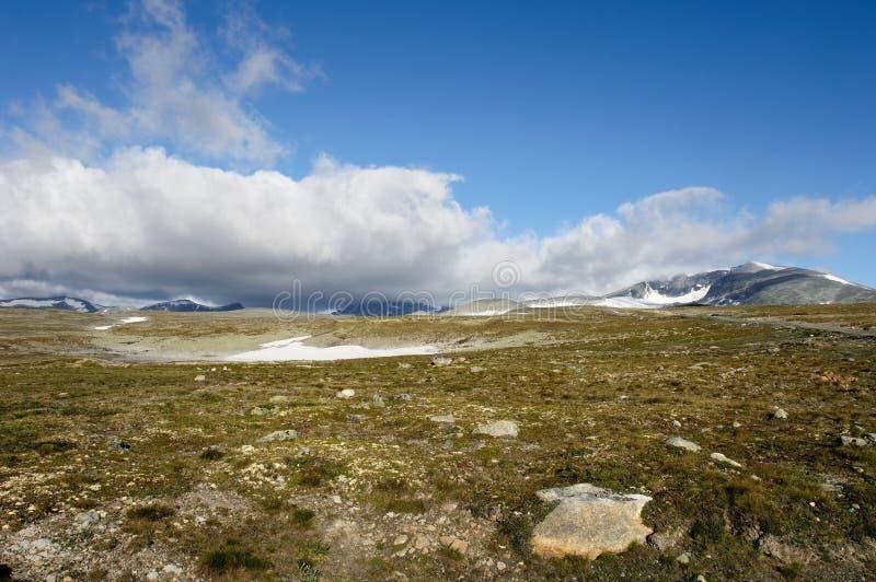 Sosta nazionale di Dovrefjell fotografia stock