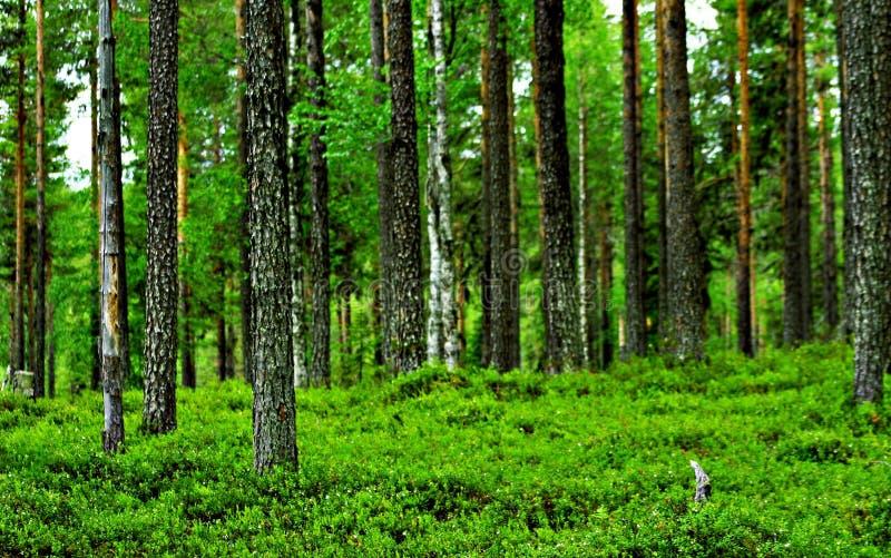 Download Sosta nazionale di Mudus fotografia stock. Immagine di foresta - 7309734