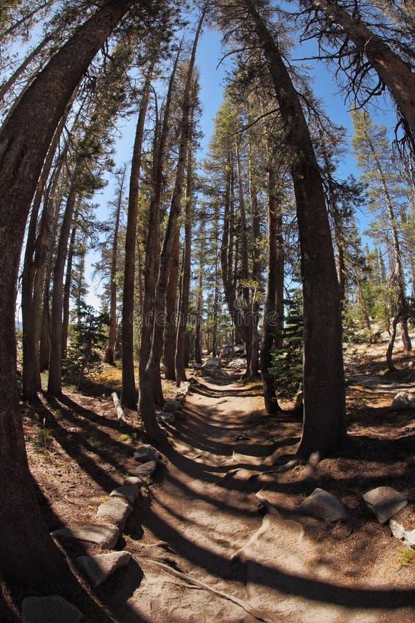 Sosta pittoresca Yosemite del inl del sentiero per pedoni della montagna. immagine stock libera da diritti