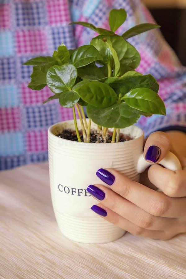 Sosteniendo una taza por completo de café de la planta foto de archivo