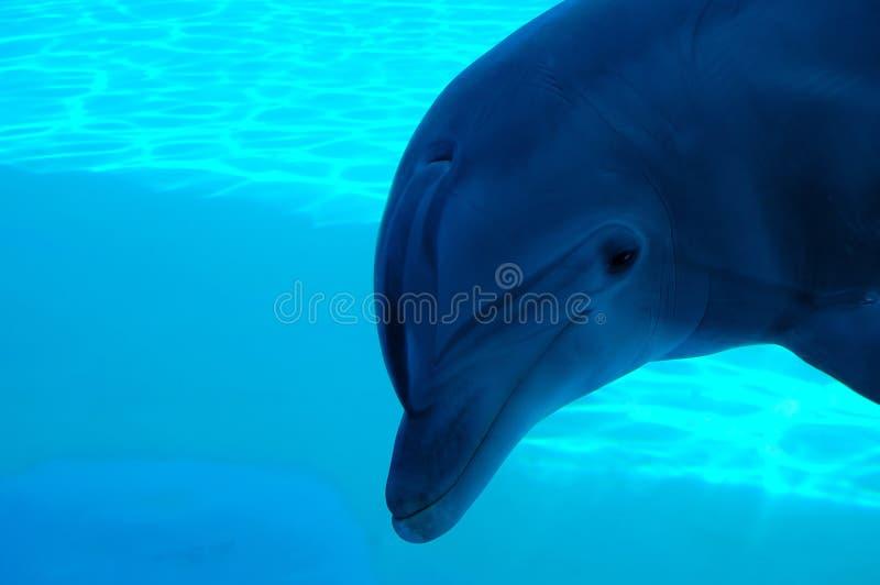 Sotto acqua