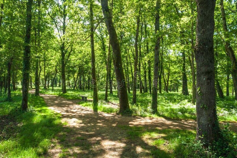 Sotto gli alberi fotografia stock