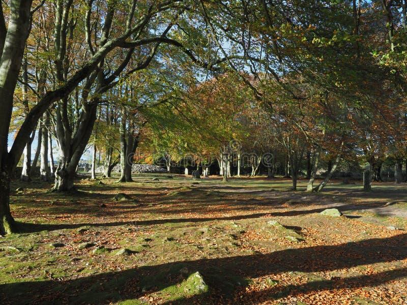 Sotto il baldacchino dei colori di autunno ai cairn di Clava vicino ad Inverness immagine stock