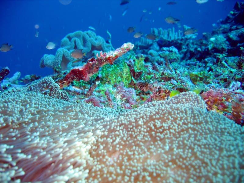 Sotto il mare immagine stock