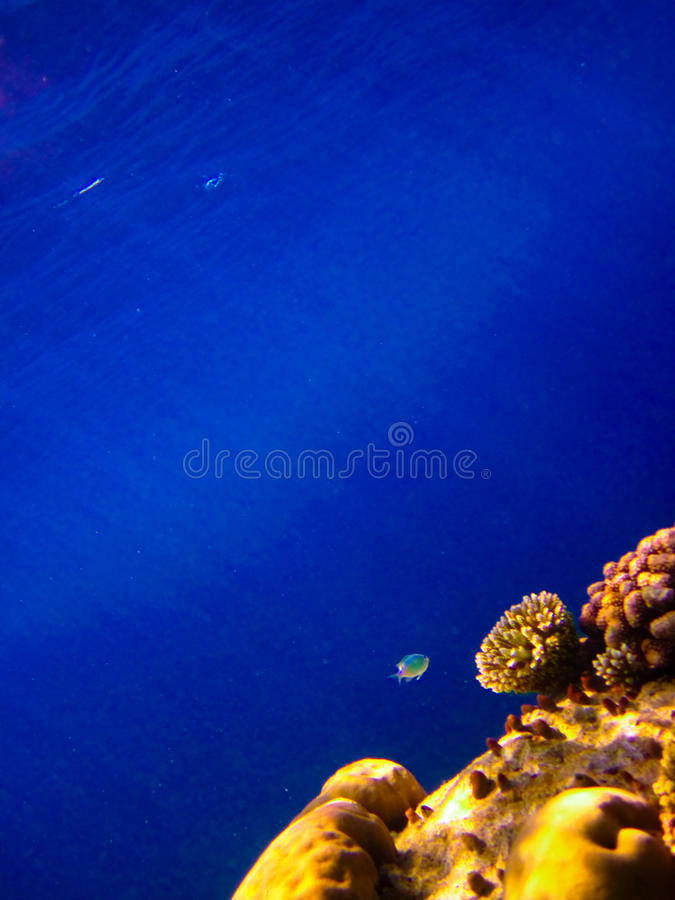Sotto il mondo dell'acqua ai Maldives immagini stock