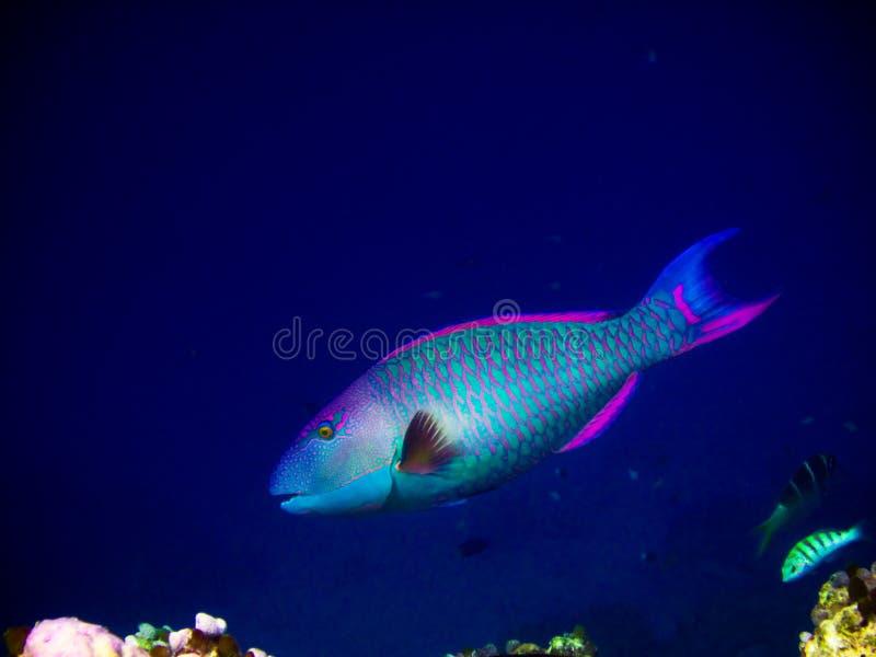 Sotto il mondo dell'acqua ai Maldives fotografia stock libera da diritti