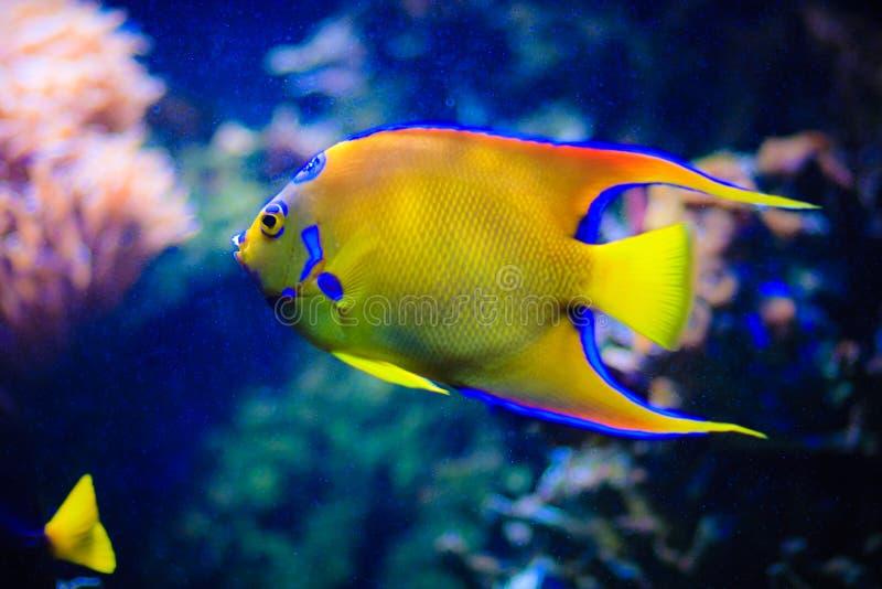 Sotto il mondo dell'acqua ai Maldives fotografie stock libere da diritti