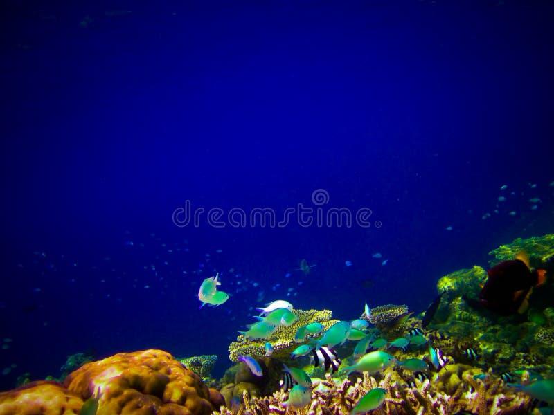 Sotto il mondo dell'acqua ai Maldives immagine stock libera da diritti
