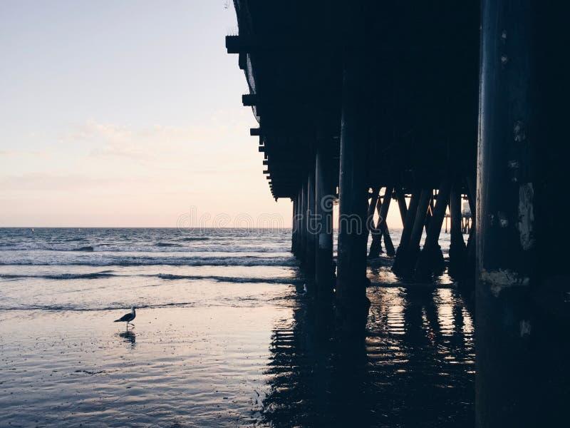 Sotto il pilastro al tramonto con un gabbiano nel telaio fotografia stock