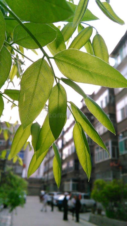 Sotto l'albero di banyan immagine stock