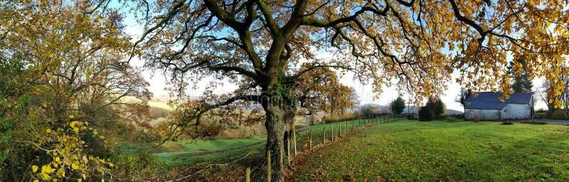 Sotto l'albero di quercia immagine stock libera da diritti