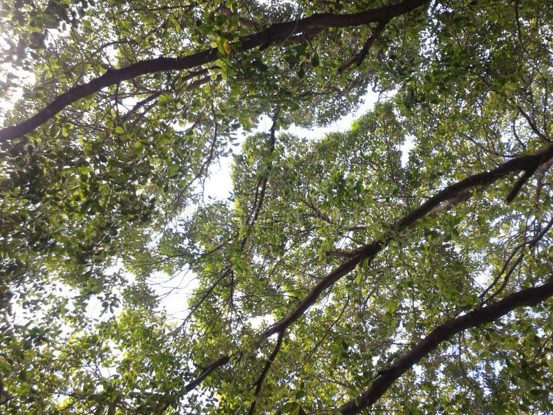 Sotto l'albero ed il cielo di verde fotografia stock